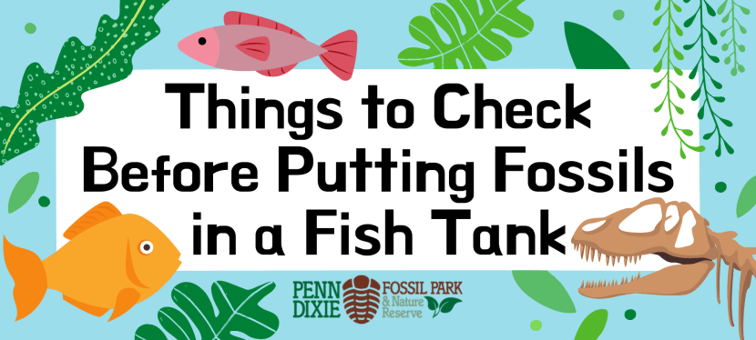 Things to Check Before Putting Fossils in a Fish Tank