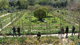 Monet's formal garden from the house, by Penne Cole