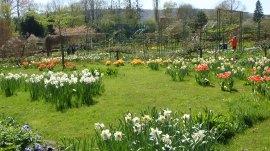 Monet's formal garden, by Penne Cole