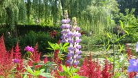 Monet's Garden, by Penne Cole