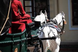 Horses at City Palace Jaipur