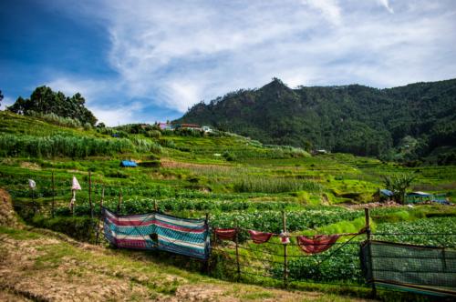 Organic farms in the village