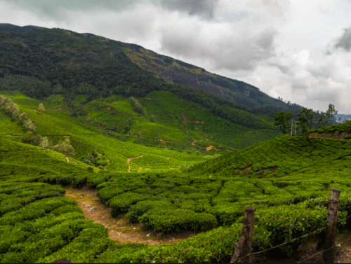 View of Munnar tea estate from bus