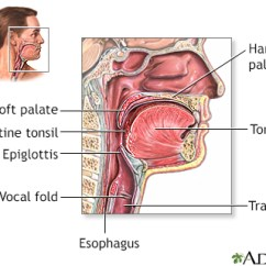 Diagram Of The Human Nose And Throat 6 Way Trailer Plug Wiring Dodge Strep (streptococcal Pharyngitis) – Penn Medicine