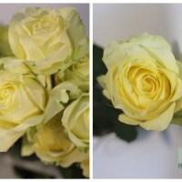 Caipirinha Rose