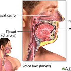 Diagram Of The Nose And Its Functions Hyundai Santro Ecu Wiring Anatomy Function Respiratory System Penn State Hershey When You Breathe In Through Your Or Mouth Air Is Filtered Natural Lines Defense That Protect Against Illness Irritation