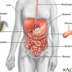 Diagram Of Large Intestine And Colon 2006 Gmc Envoy Radio Wiring Digestive System Information