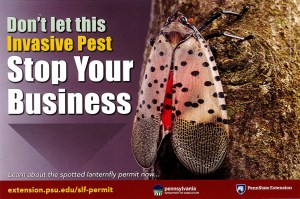 Spotted Lanternfly: Don't let this invasive pest stop your business