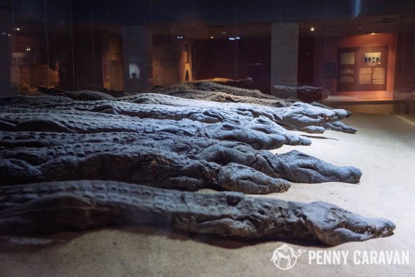 Crocodile mummy