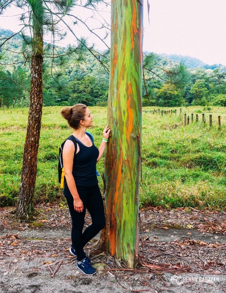 Rainbow Eucalyptus!