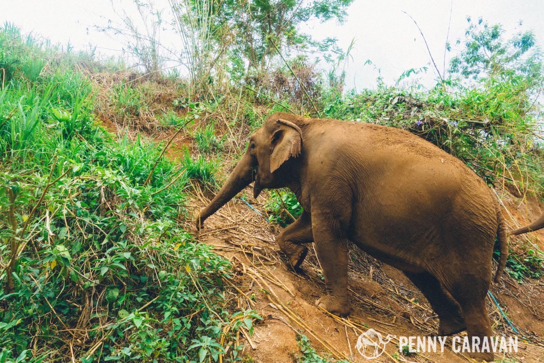 Elephant Nature Park Care For Elephants