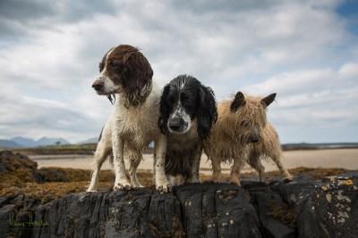 My dogs on the beach
