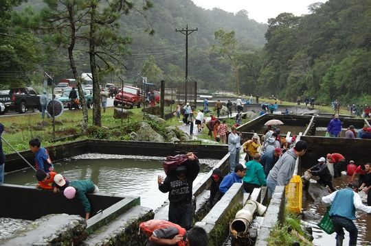 People taking trout from the farm