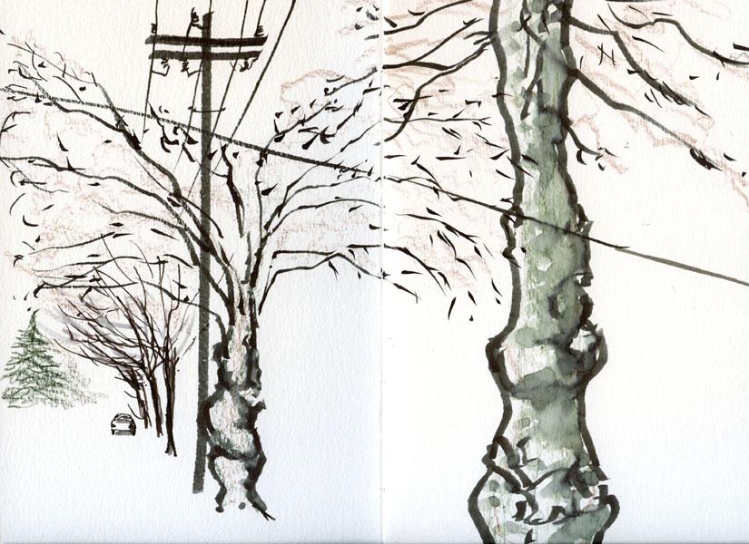 12-26-15 Maple Leaf neighborhood, Seattle - Tina Koyama