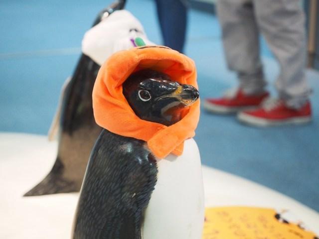 Penguin Nagoya_Aquarium