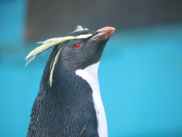 東山動植物園 ペンギン
