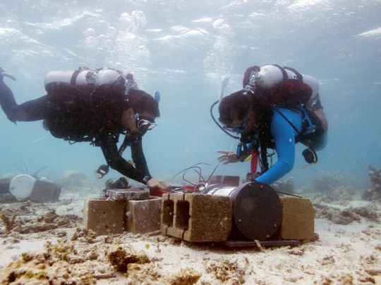 Look: Under the sea with scientists fighting climate change
