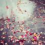 capture-fleurs
