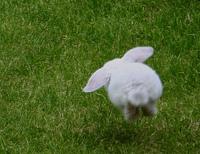 Bunny_hopping