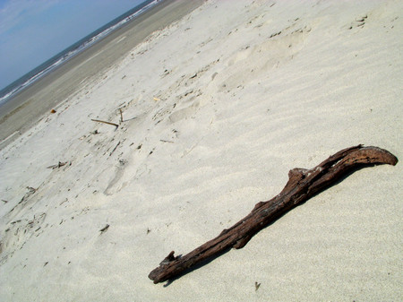 Driftwood_kiawah_island