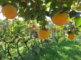 Pension Biba Garden Products