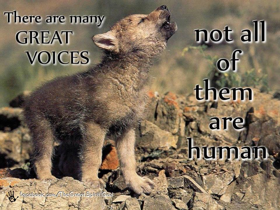 Wolf And Sheepdog Quote Wallpaper Voices Penspen S Blog