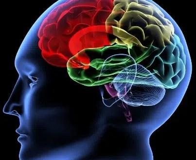 Photo courtesy: https://www.mcgill.ca/neuroscience/