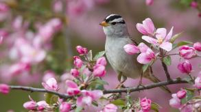 bird-of-spring
