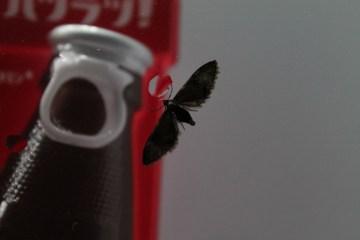 A bug in the vending machine.