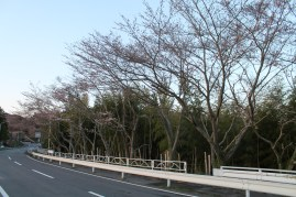 上総亀山 cherry blossoms