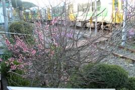 A pretty bush next to the rails.