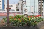 千葉公園 Tulips