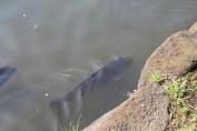 千葉公園 Wildlife 11
