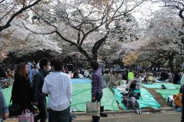 渋谷代々木公園 10