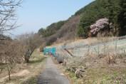 長野県 松本 51