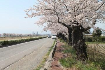 長野県 松本 58
