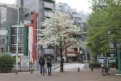 東京上野公園 34