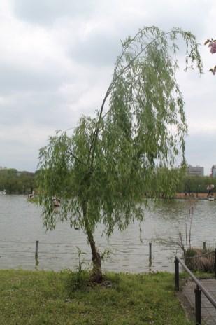東京上野公園 39