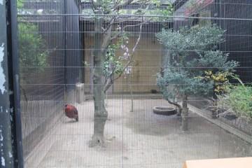 東京上野動物園 1
