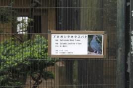 東京上野動物園 10