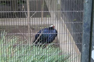 東京上野動物園 12