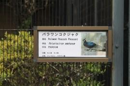 東京上野動物園 22