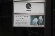 東京上野動物園 35