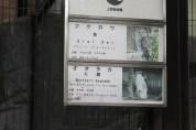 東京上野動物園 37