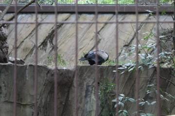 東京上野動物園 45