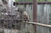 東京上野動物園 49