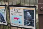 東京上野動物園 50