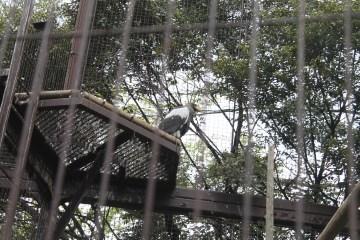 東京上野動物園 53