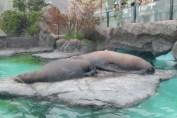 東京上野動物園 86