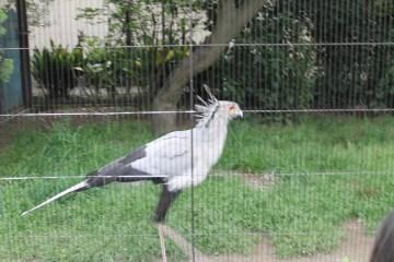 東京上野動物園 91